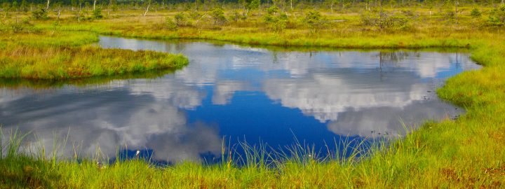 Restoring Peatlands for Climate
